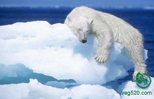 濒临灭绝动物环保